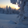 A snowy Tree in Levi Finland