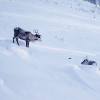 Photo of Reindeer in Levi Finland by Sanya Khomenko