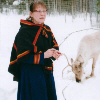 A Sami woman next to a white reindeer
